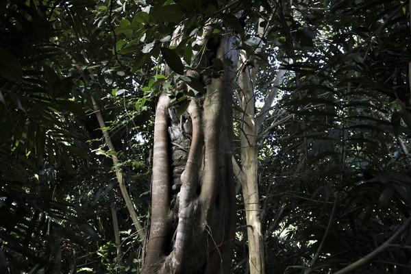 Guatemala, Petén