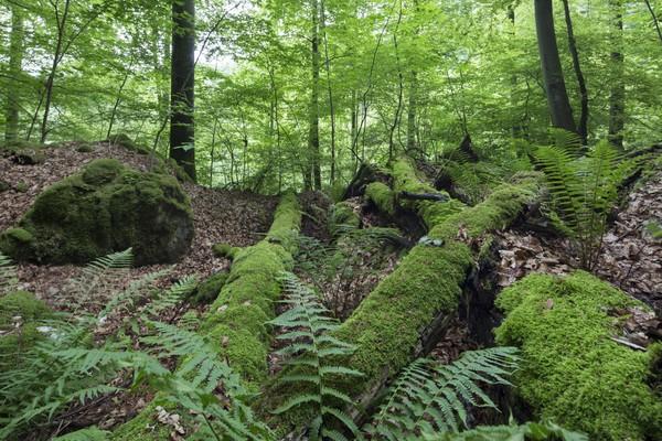 Wildnis am steilen Albtrauf