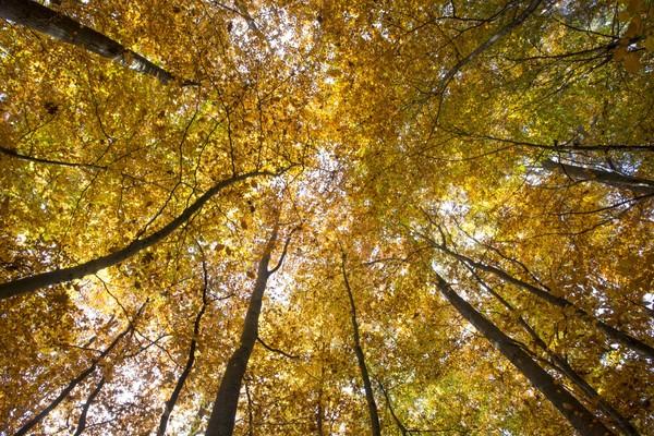 Goldener Oktober im Neckarland